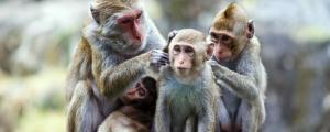 ile aux singes