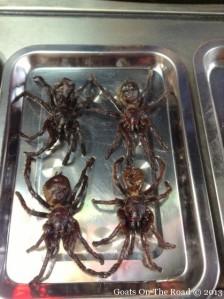 black-spider[1]